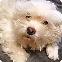 Adopt A Pet :: BOO-BOO (SRC#1819) IN NC - Lenoir, NC