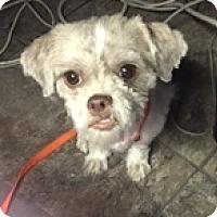Adopt A Pet :: Nikki - N. Babylon, NY