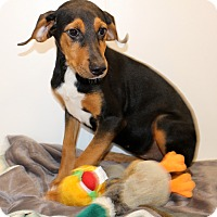 Adopt A Pet :: Annabelle - Glastonbury, CT