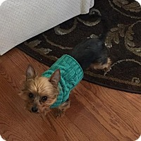 Adopt A Pet :: Rosie - Clarkston, MI