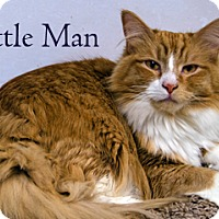 Adopt A Pet :: Little Man - Hamilton, MT