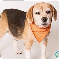 Adopt A Pet :: Odie - Santa Monica, CA