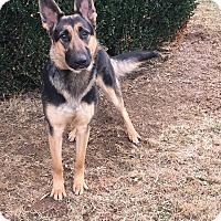 Adopt A Pet :: Elsa - Oak Grove, KY