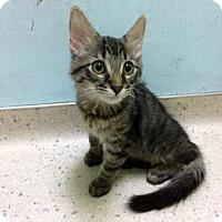 Adopt A Pet :: Kovu - Janesville, WI