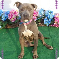 Adopt A Pet :: SASHA - Marietta, GA