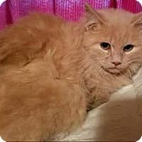 Adopt A Pet :: Henry Thoreau Austen - Ennis, TX