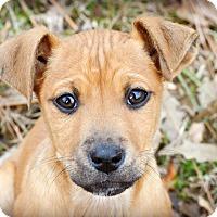 Adopt A Pet :: Tink - Glastonbury, CT