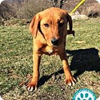 Adopt A Pet :: Phantom - Kimberton, PA
