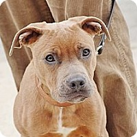 Adopt A Pet :: Edge - Reisterstown, MD