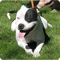 Adopt A Pet :: Lester - Medicine Hat, AB