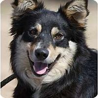 Adopt A Pet :: Abby - Providence, RI