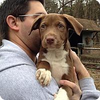 Adopt A Pet :: Cocoa - Mount Laurel, NJ