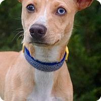 Adopt A Pet :: Benedict - Salem, OR