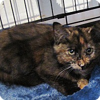 Adopt A Pet :: Clarissa - Berkeley Hts, NJ