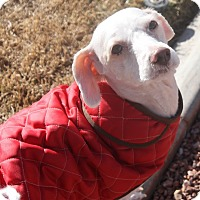 Adopt A Pet :: Walter - Henderson, NV