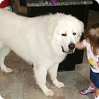 Adopt A Pet :: Buddy - Kyle, TX