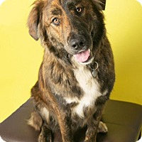 Adopt A Pet :: Elvis - Roanoke, VA