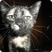 Adopt A Pet :: Danica - Milwaukee, WI