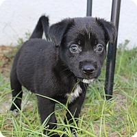 Adopt A Pet :: Scooter - Weeki Wachee, FL