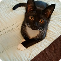 Adopt A Pet :: Alec - Covington, KY