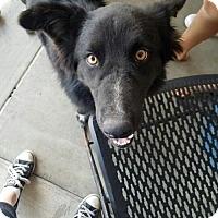 Adopt A Pet :: Timber - Lakeport, CA