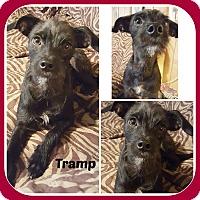 Adopt A Pet :: TRAMP - Malvern, AR