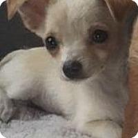 Adopt A Pet :: Katy - MIAMI, FL
