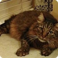 Adopt A Pet :: Sadie - Sherman Oaks, CA