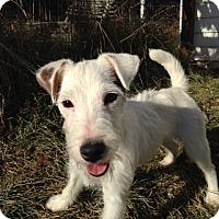 Adopt A Pet :: Effron - Cumberland, MD