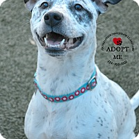 Adopt A Pet :: Nonnie - Youngwood, PA