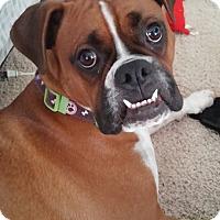 Adopt A Pet :: Baxter - Boise, ID
