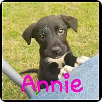 Adopt A Pet :: Annie - Walker, LA