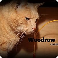 Adopt A Pet :: Woodrow - Springfield, PA