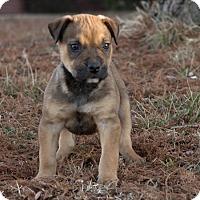 Adopt A Pet :: Benji - oklahoma city, OK