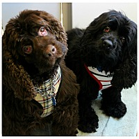 Adopt A Pet :: Ebony & Coco - Forked River, NJ