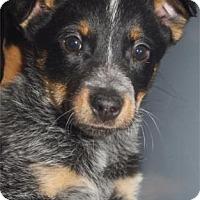 Adopt A Pet :: Rosie - Waupaca, WI