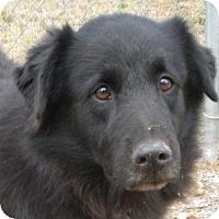 Adopt A Pet :: Franklin - Athens, GA