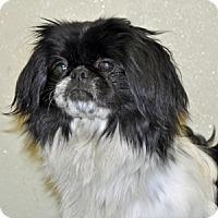 Adopt A Pet :: Ribbon - Port Washington, NY