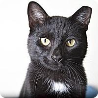 Adopt A Pet :: Bogart - Brooklyn, NY