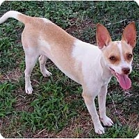 Adopt A Pet :: Calamity Jane (CJ) - San Angelo, TX