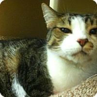 Adopt A Pet :: Pamela - Monroe, GA