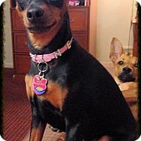 Adopt A Pet :: Nellie - Nashville, TN