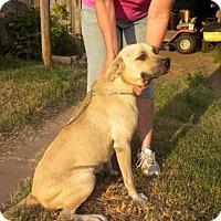 Adopt A Pet :: BEN - Childress, TX