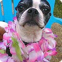 Adopt A Pet :: Darla - Cumberland, MD
