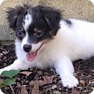 Adopt A Pet :: Sailor (in Alabama)
