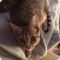 Adopt A Pet :: Jem - Hamilton, ON