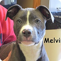 Adopt A Pet :: Melvin - Warren, PA