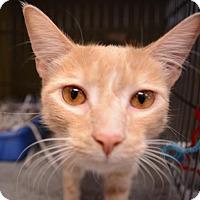 Adopt A Pet :: Timone - Media, PA