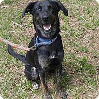 Adopt A Pet :: Stella - Spring Valley, NY