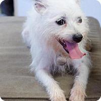 Adopt A Pet :: Sugar - Homewood, AL